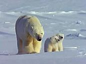 משפחת החיות - הרים