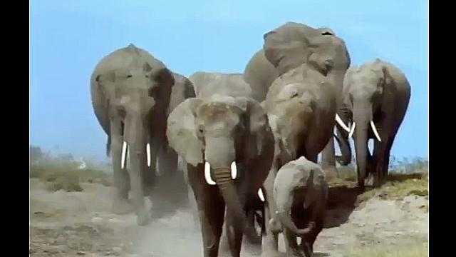 Watch Full Movie - משפחת החיות שלי - ג'ירף - לצפיה בטריילר